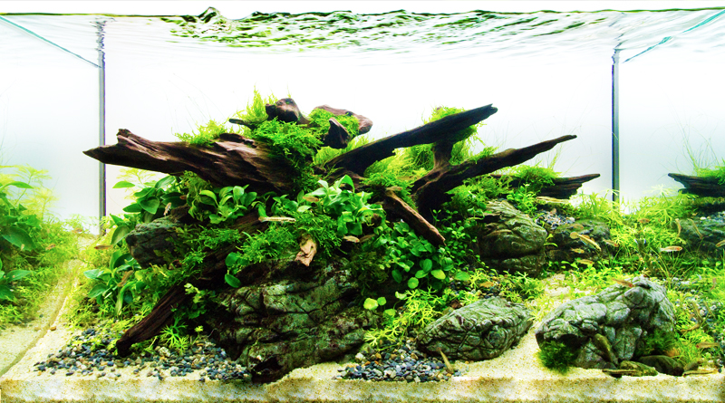 aquascaping beginner's guide