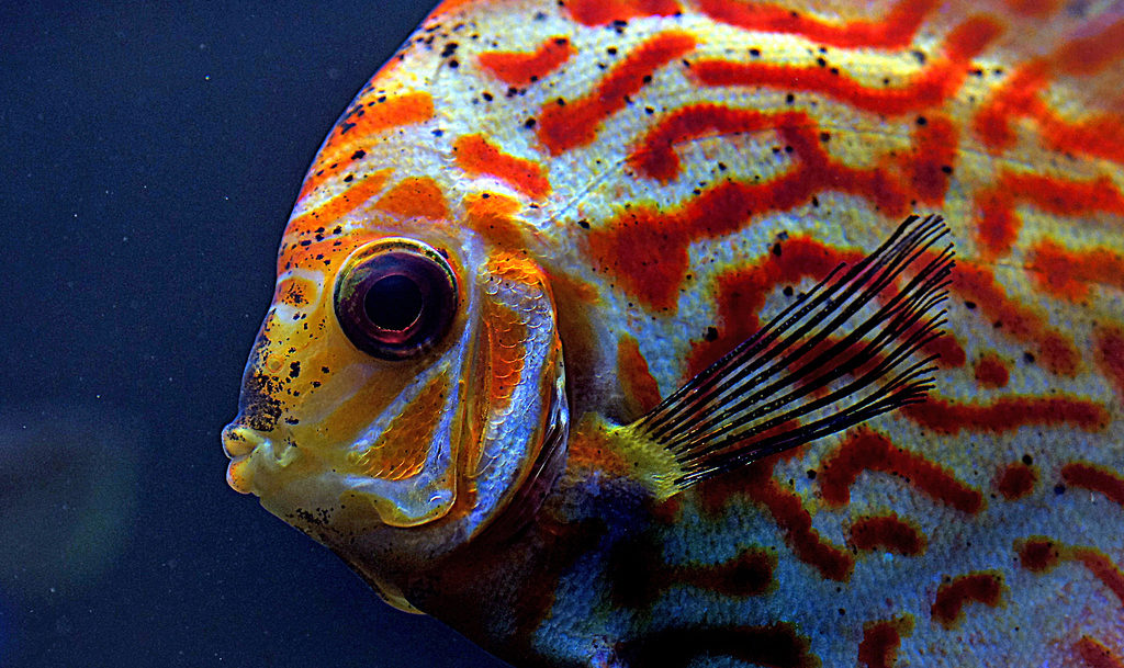 aquascaping can have a physical affect on the color of your fish