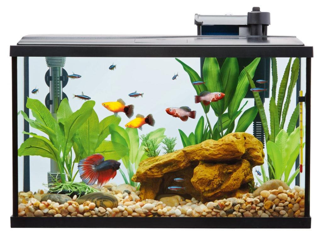 10 gallon aquarium with staged aquascape