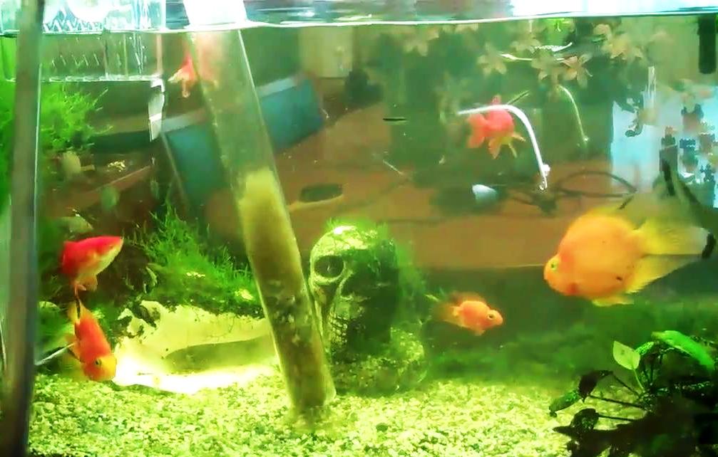 Regular water changes alleviate overstocked aquariums