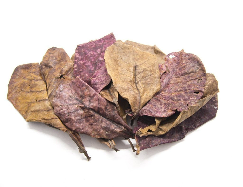 Catappa leaves or Indian almond leaves are beneficial for your aquarium under certain circumstances