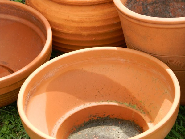 Terracotta pots can be used to make hiding spots for your cichlids.