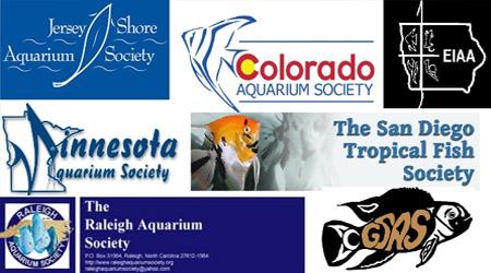 Aquarium society collage