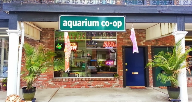 You can buy healthy fish from good local fish stores like the aquarium co-op in edmonds washington