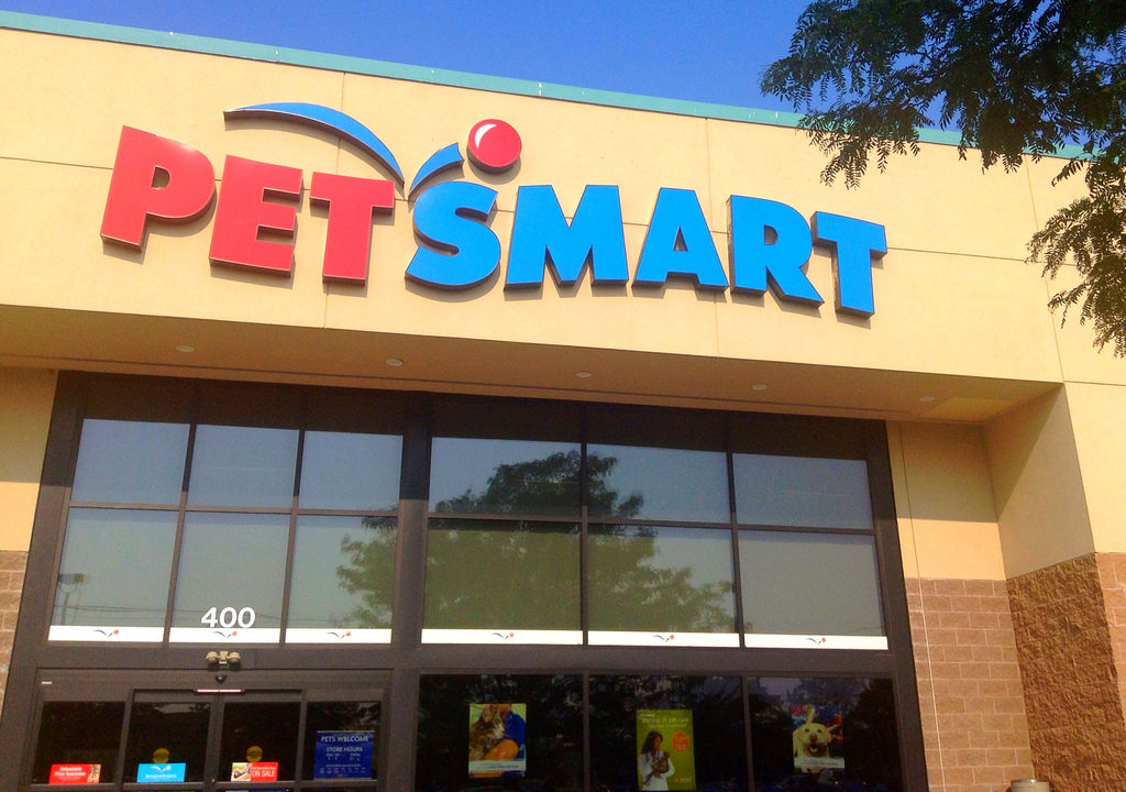 It can be harder to find healthy fish at big box stores, but sometimes you can find healthy fish at petsmart or petco.