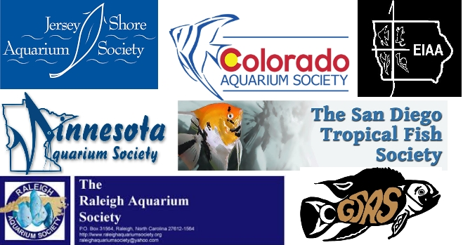 guppies die fast join aquarium society to find healthy fish