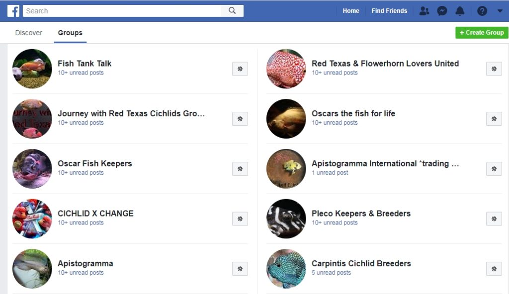 Facebook groups can be a great place to find and buy healthy aquarium fish.