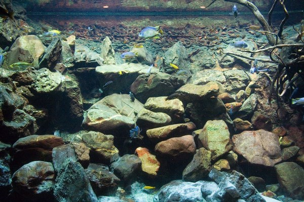 Clever use of rocks can provide fish with lots of places to hide