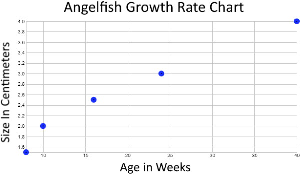 Angelfish growth rate graph chart
