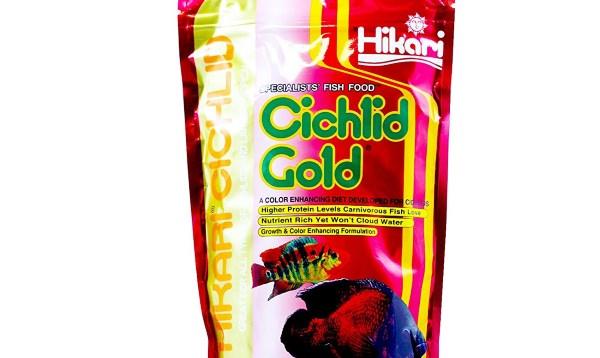 Hikari cichlid gold