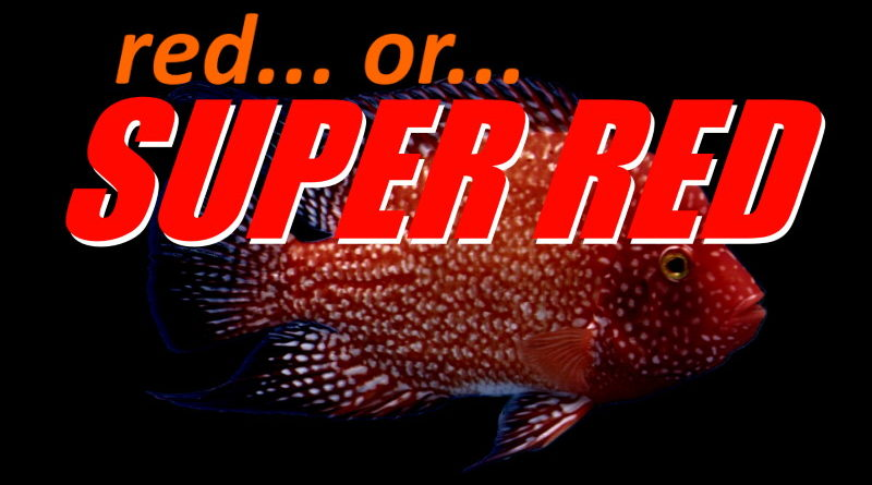 difference between red and super red texas cichlids