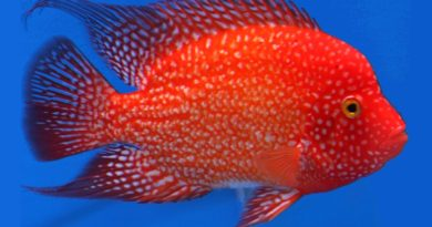 Color And Color Changes In Goldfish - coolfish network