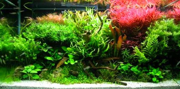 A planted aquarium needs a good light to succeed