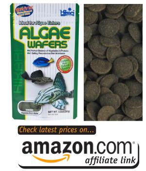 plecos and algae eaters love hikari algae wafers