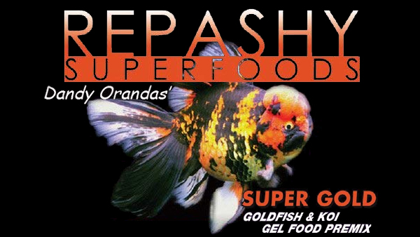 dandy orandas repashy super gold goldfish food