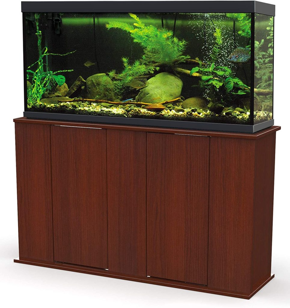 discus need a tall aquarium to feel comfortable