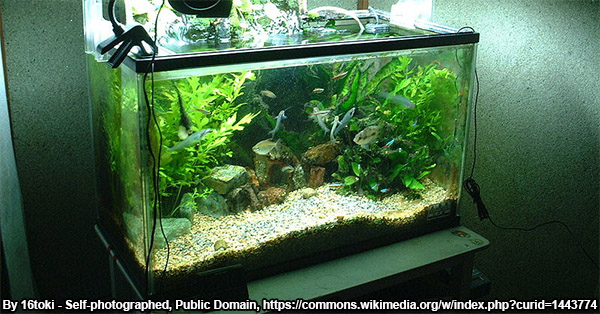 what kind of aquarium does your oscar need