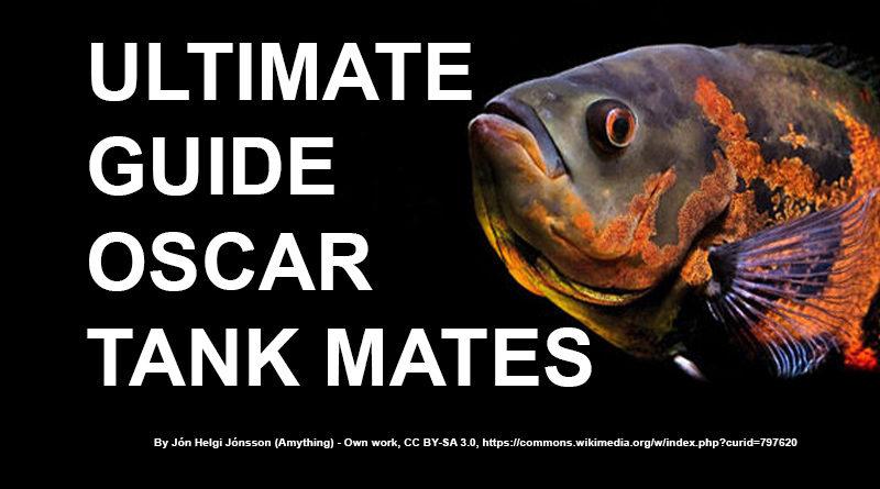 Oscar Tank Mates: Ultimate Guide
