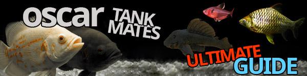 oscar tank mates